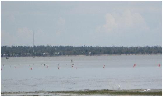 Gambar 4. Lokasi budidaya rumput laut KP3RL, ditandai dengan pelampung berwarna merah