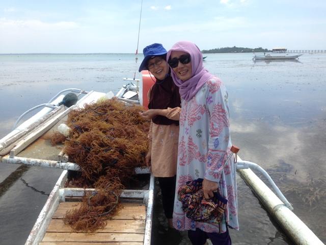 Hasil Panen Bibit Rumput Laut (umur 20 hari)
